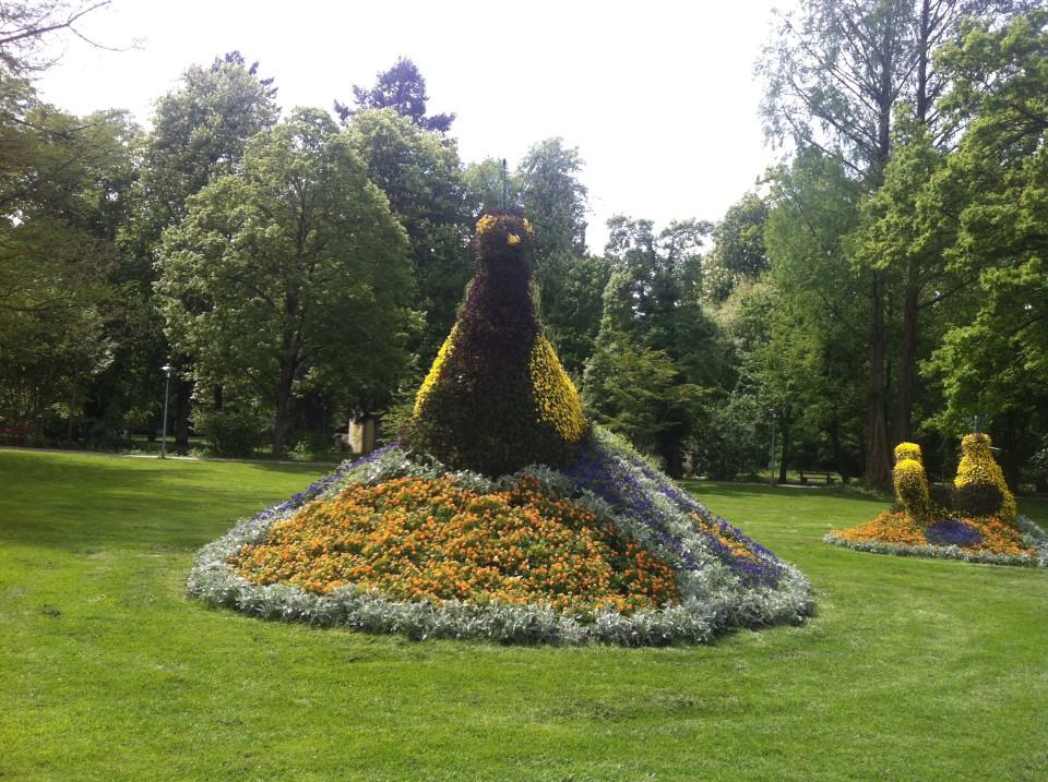 Blumenpfau in Bad Krotzingen