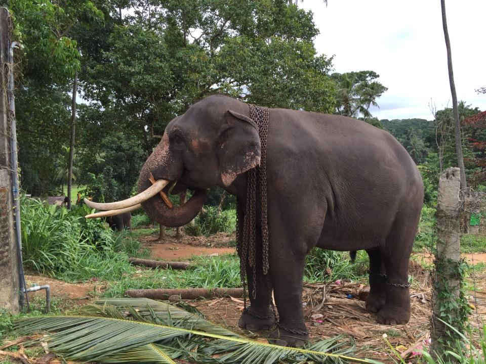 Elefantenfarm auf dem Weg zum Yale National Park Sri Lanka