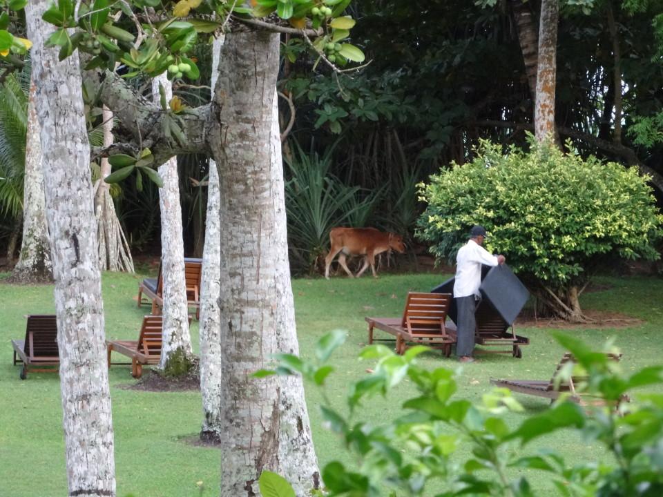 Ayurveda Sri Lanka Surya Lanka