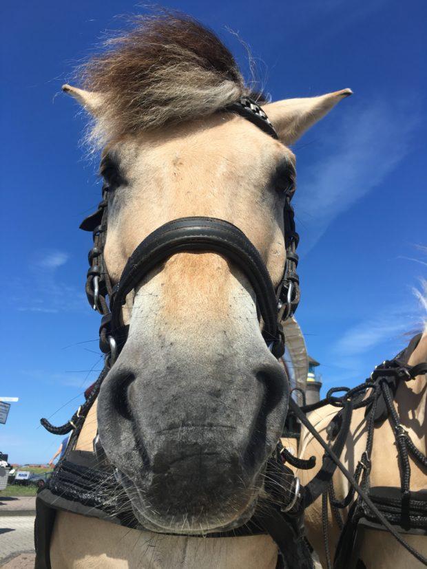 Pferde_Juist_Lieblingsflecken